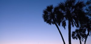palm trees against sunset in Sarasota, Florida