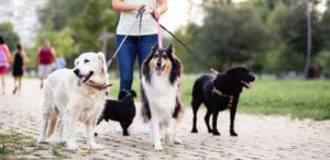 dog walker in action