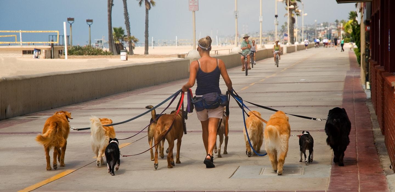 Dog Walker on broadwalk