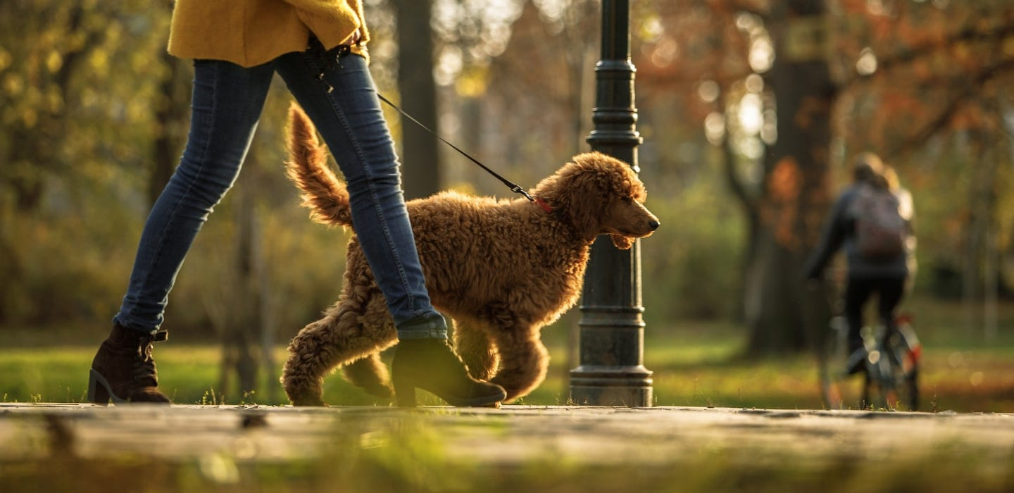 How much do pet sitters make?