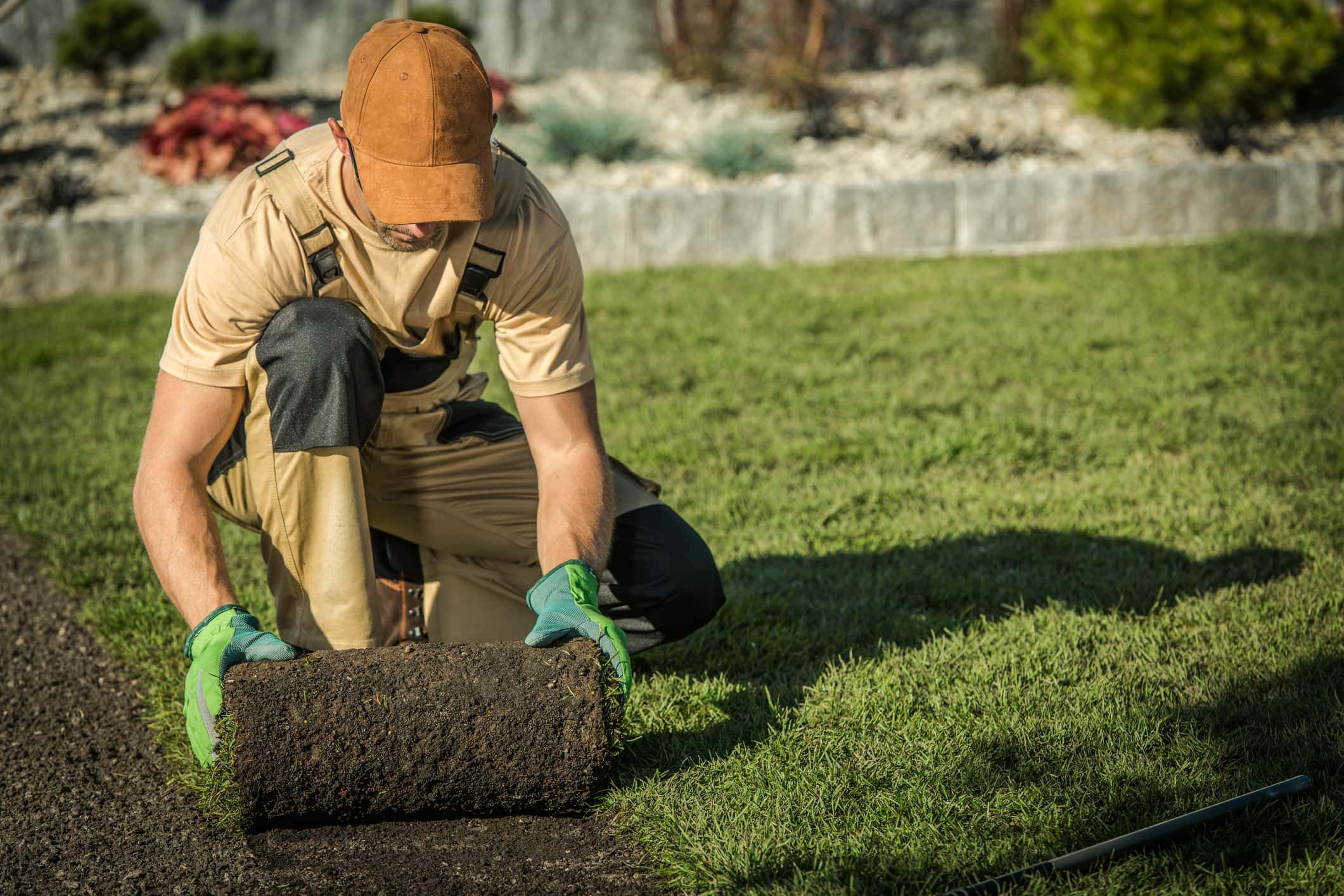 Installing Natural Grass From Roll