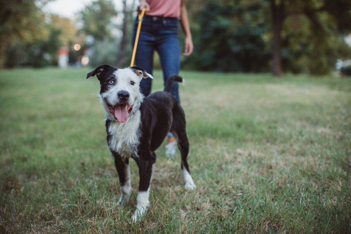 Tips and Tricks for Dog Walkers